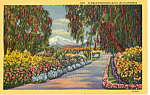 Click here to enlarge image and see more about item p25147: Flower and Pepper Tree Bordered Walk in California