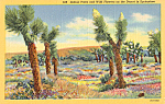 Click here to enlarge image and see more about item p25164: Joshua Trees and Wildflowers Postcard p25164