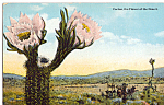 Click here to enlarge image and see more about item p25165: Cactus the Flower of the Deaert Postcard p25165