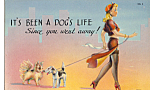 Click here to enlarge image and see more about item p25270: It's Been a Dog's Life p25270
