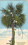 Click here to enlarge image and see more about item p25310: Palm Tree Entwined with Night Blooming Cereus p25310