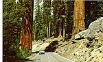 Highway Through The Redwood Trees