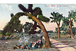 Click here to enlarge image and see more about item p25465: Yucca Palms in the Desert Postcard p25465