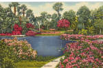 Click here to enlarge image and see more about item p25757: Azalea Time Cypress Gardens Florida p25757