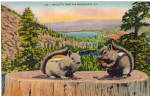 Click here to enlarge image and see more about item p25813: I am Nutty over the Poconos Postcard p25813