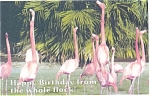 Click here to enlarge image and see more about item p2642: Flamingo Birthday Greeting Card Postcard