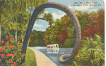 Click here to enlarge image and see more about item p26655: The Horse Shoe Palm Silver Springs Florida p26655