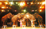 Click here to enlarge image and see more about item p26678: Ponderous Pachyderms  Circus World  Orlando  Florida p26678