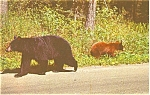 Click here to enlarge image and see more about item p2677: Mother Bear and Cubs Postcard p2677