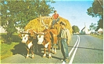 Click here to enlarge image and see more about item p2717: Oxen in Nova Scotia Postcard p2717