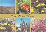 Texas Desert Blooms Postcard p2764