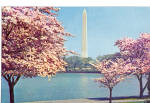 Washington Monument in Cherry Blossom Time
