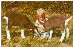 Click here to enlarge image and see more about item p27862: Three Little Kids, Goats