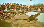 Click here to enlarge image and see more about item p27963: Harbor Seals, Aquarama Theatre of The Sea
