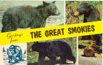 Black Bears in Great Smokies Postcard p28080