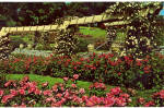 Hershey Rose Garden, Hershey,Pennsylvania