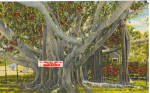 Click here to enlarge image and see more about item p28513: Banyan Tree Edison Winter Home Ft Myers FL p28513