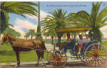 Click here to enlarge image and see more about item p28523: Horse Drawn Carriage in St Augustine Florida p28523