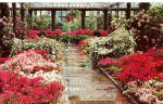 Click here to enlarge image and see more about item p28539: Azaleas and Rhododendrons in The Azalea House