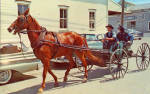 Amish Family with Horse Drawn Open Buggy