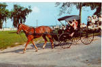 Mennonite Family with Horse Drawn Open Buggy