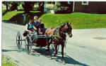 Amish Young Boy and Girls in Buggy