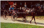 Amish Girls in Horse Drawn Buggy