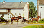 Amish Boys in Horse Drawn Buggy at Farm