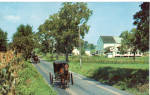 Amish Families in  Buggies Postcard p28630