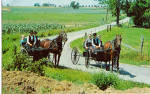 Amish Young Folk in  Buggies Postcard p28631