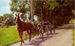 Amish Boys in  Buggy Towing a new Buggy Home