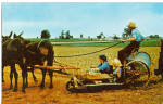 Amish Family Prepares the Tobacco Planter
