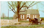 Amish Buggy Postcard p28723