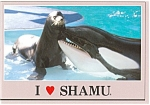 Click here to enlarge image and see more about item p2875: I Love Shamu Sea World FL Postcard