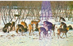 Herd of Deer at Feeding Area Postcard p28827