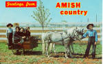 Amish Children with Pony Cart p28984