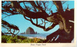 Click here to enlarge image and see more about item p29023: Scenic Oregon Coast Postcard p29023