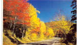Click here to enlarge image and see more about item p29061: Fall Splendor in New England Postcard p29061