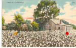 Click here to enlarge image and see more about item p29346: Cabin in a Cotton Field Postcard p29346