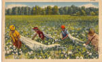 Click here to enlarge image and see more about item p29347: Workers in a Cotton Field Postcard p29347