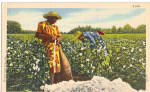 Click here to enlarge image and see more about item p29348: Workers in a Cotton Field Postcard p29348