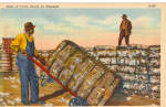 Click here to enlarge image and see more about item p29349: Bales of Cotton Ready for Shipment Postcard p29349