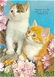 Click here to enlarge image and see more about item p2955: Inspirational Kittens Postcard