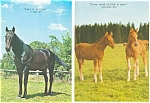 Click here to enlarge image and see more about item p2957: Inspirational Horses Postcard p2957 Lot 2