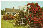 Cape Cod Cottage and Roses,Cape Cod, MA