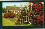 Cape Cod Cottage and Roses