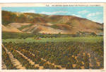 Orange Groves and Foothills, California