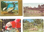 Birds of  Florida Postcard Lot of 4