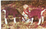 Toddler with Two Young Goats