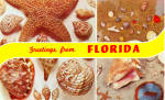 Florida Sea Shells and Starfish Postcard p30139
